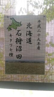 ShinSobaUtihajimemasitaPOP2017.jpg